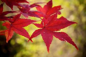 Abstract autumnal backgrounds for your design photo