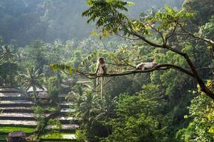 El macaco (Macaca fascicularis) en la selva sentada en un árbol en s