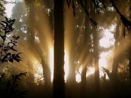 rayos de sol dorados