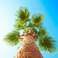 Palm tree from below photographed