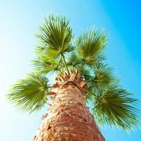 palmboom van onderen gefotografeerd