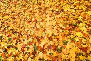foglie cadute in autunno