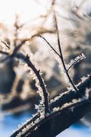 galhos de árvores na geada no inverno em um sol de fundo