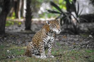 Jungles of Mexico