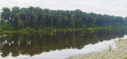Reflection of oil palm plantation