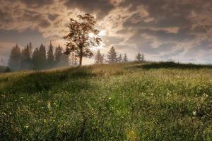 Montanhas carpathian. árvore na encosta de uma montanha com o sol.
