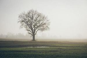 hermoso prado verde en niebla espesa. aspecto retro de película granulada. foto