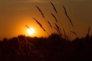 Sonnenuntergang Weizen 1