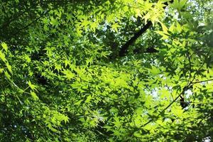 luz del sol a través del verde tierno