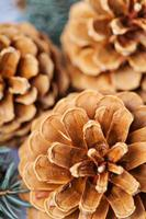 Pine cones  and fir macro closeup