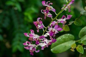 cerrar hermosa orquídea