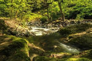 Río en el parque nacional hirkan en lankaran azerbaiyán