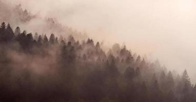 hermosa niebla en un cárpato