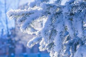 takken bedekt met sneeuw