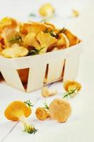 chanterelle (cantharellus cibarius) on a white wooden background
