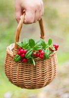 Sprigs of cowberry in the basket