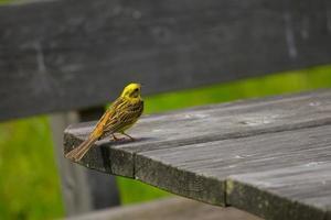 Small Bird photo