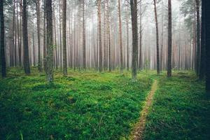 mañana brumosa en el bosque. aspecto retro de película granulada.