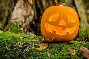 Pumpkin in the woods photo