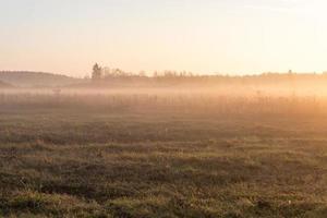 beautiful misty meadow in the morning frost