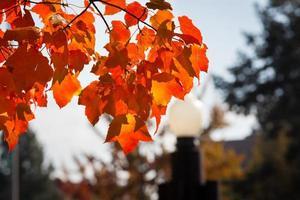 colores de otoño foto