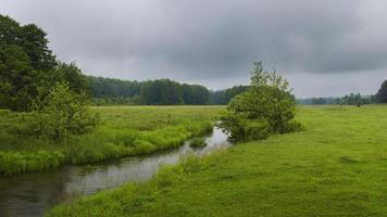 prado verde foto