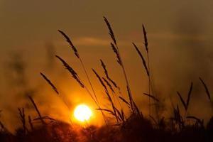 Sonnenuntergang Weizen 2