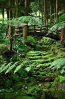 puente y ambiente de musgo verde.