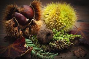 chestnut and truffle mushroom on moss photo