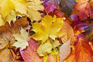 Colourful autumn fall leaves photo