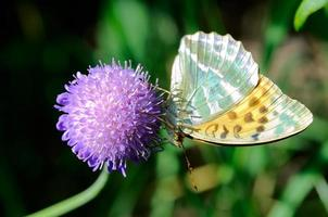 Butterfly on a flower photo