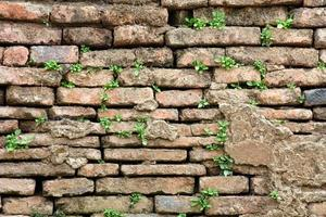 Old Brick Wall Grown With Grass
