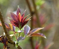 nieuwe bladeren