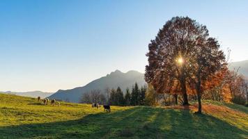 escena de pastos de montaña en otoño