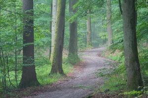 Steigerwald Forrest