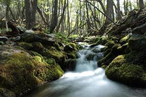 der urwald im parque nacional feuerland foto