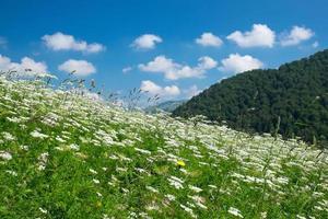 prado de montaña foto