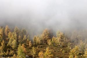Herbst am Goldeck photo