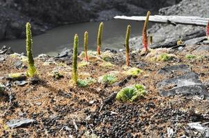Photo mountain plants molodilo
