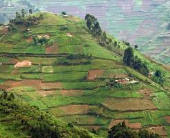 montañas virunga en áfrica foto
