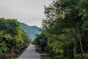 Road, trees and mountains photo