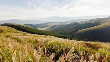 Vista de la vasta meseta prado verde amarillo.