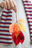 Two autumn leaves