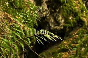Cuevas de montaña escondidas en la montaña Miroc y el parque nacional Djerdap foto