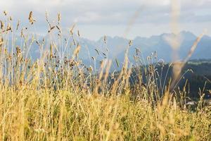 Cerca del campo de maíz ecológico foto