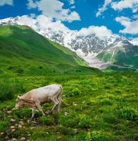 Beautiful meadow landscape near Ushguli, Svaneti, Georgia.
