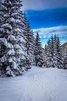camino de montaña de invierno en el bosque foto