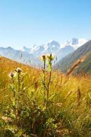 plant in the mountains photo