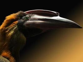 Head of bird