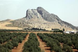 Olives, Andalusia, Spain photo